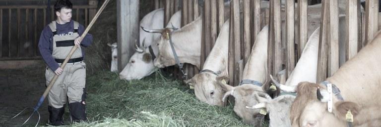 Jasmin, Fütterung der Kühe